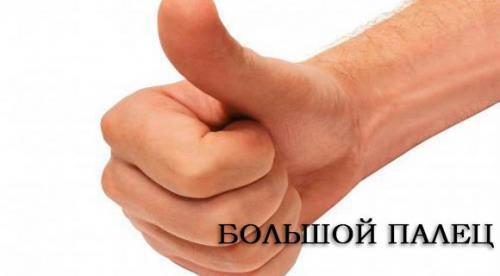 Фаланги большого пальца руки. Большой палец