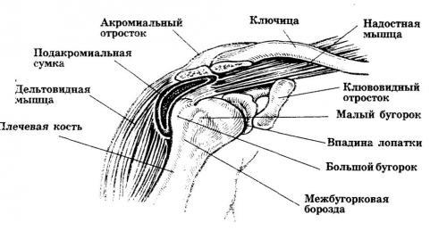 Повреждение Хилл-Сакса плечевого сустава. Классификация