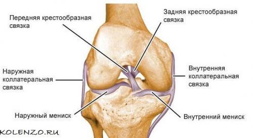 Поперечная связка колена. Крестообразная связка коленного сустава: анатомия, травмы, лечение