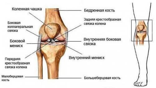 Как долго восстанавливаются связки колена. Восстановление после растяжения связок коленного сустава