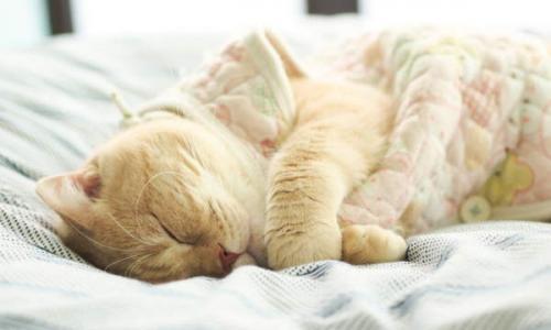 Почему кошка ложится на грудную клетку. Если устраивается в ногах или на животе