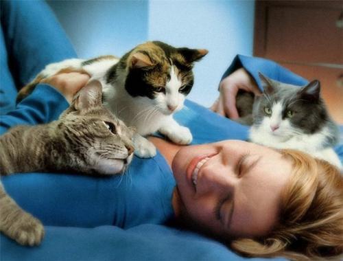 Кошка не ложится на больное место почему. Кототерапия: лечение мурчанием