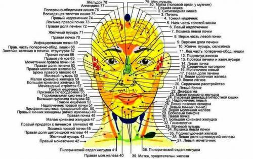 Биологически активные точки на лице и голове. Определяем биологически активные точки на лице