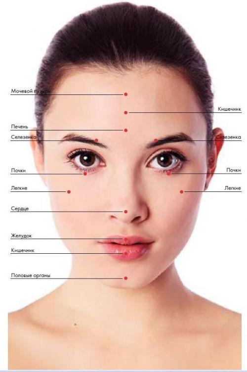 Внутренние органы на лице. Как определить здоровье по высыпаниям на лице