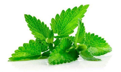 Самые полезные травы для чая. Эффективность и применение
