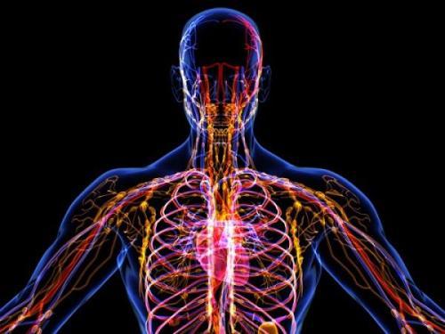 Интересные факты про лимфу. Неизведанные факты о лимфатической системе, которые полезно знать каждому. Башни.Нет