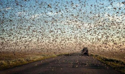 Интересные факты О общественных насекомых. Интересные факты о насекомых