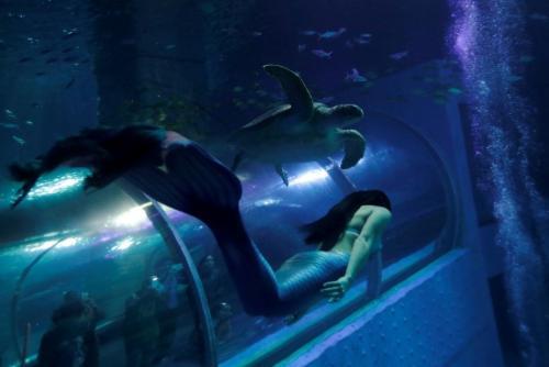 Русалки в аквариуме. Китайские русалки в аквариуме.