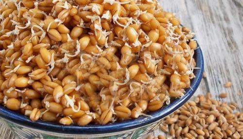 Пророщенные зерна, как приготовить. Как употреблять проростки пшеницы
