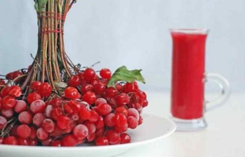 Калина польза и вред для здоровья. Калина красная для женщин – польза ягод