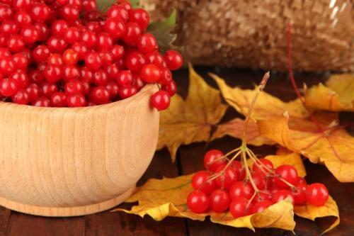 Калина пареная польза. Какая польза от плодов калины для организма человека и его здоровья, может ли быть вред