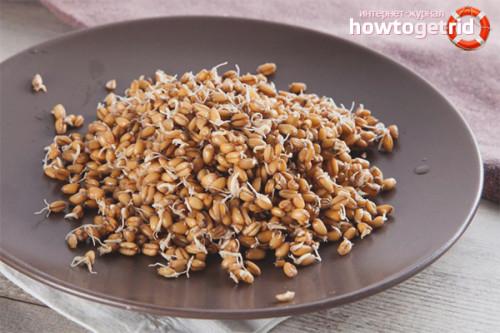 Пророщенные семена пшеницы. Что приготовить из пшеницы