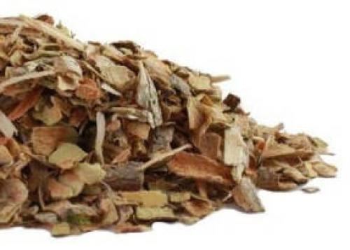 Калина растение. Кора – главное лекарственнное сырье