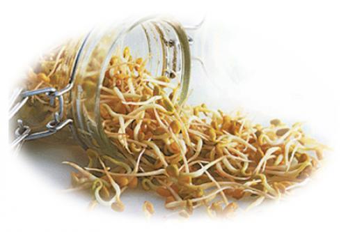 Пророщенные зерна пшеницы-купить. Пророщенные зерна пшеницы