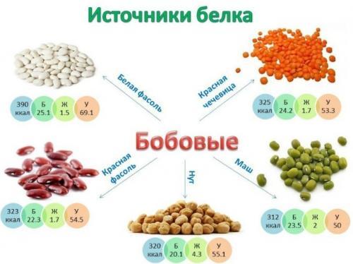 Чистый белок в продуктах. Какие продукты содержат белок в большом количестве