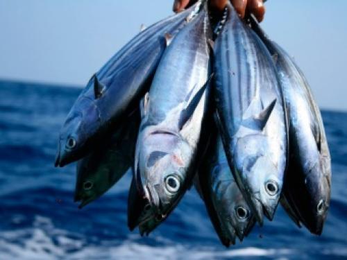 Низкокалорийная рыба список. Список нежирных сортов рыбы для диеты и похудения 01