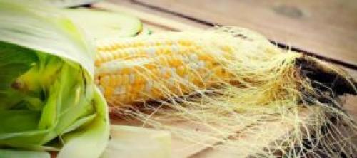 Кукурузные рыльца в гинекологии. Кукурузные рыльца для печени – полезные свойства и рецепты применения