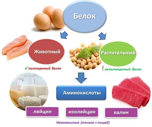 Растительные продукты богатые белком. Немного о белках