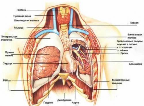 Боль в правой стороне под грудью. Чем вызвана боль под правой грудью у женщин: причины, диагностика и лечение