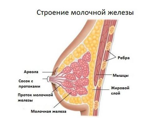Почему маленькая грудь у женщин. Причины, почему грудь маленькая у девушек