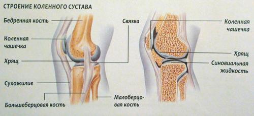 Восстановление суставов и связок. Из чего состоят суставы и связки