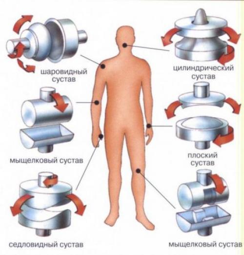 Цилиндрический сустав где находится. Анатомические особенности