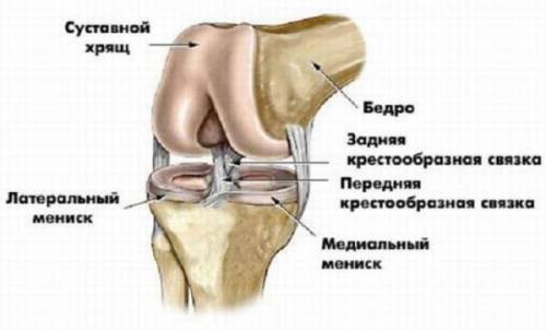 Косая подколенная связка латынь. Анатомия коленного сустава