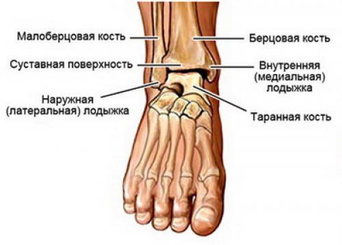Гнойный артрит голеностопного сустава. Общие сведения