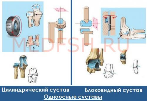 Одноосные суставы. Классификация суставов