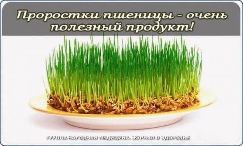 Пророщенные семена. Проростки пшеницы - чрезвычайно полезный продукт!