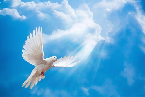 Мощная ОЧИЩАЮЩАЯ молитва всех и вся кого я вольно или невольно.