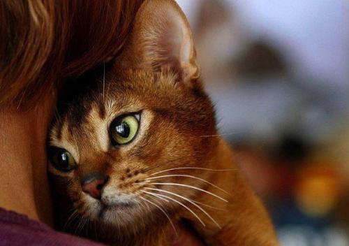 Почему кошки ложатся на больное место. Почему кошка на больное место человека ложится