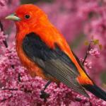 Орнитотерапия: лечебное пение птиц.