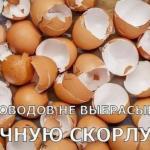 10 поводов не выбрасывать яичную скорлупу.