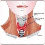 Щит для щитовидки.