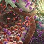 Токсины в организме человека: как накапливаются и как выводятся.