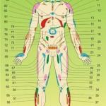 Диагностика здоровья по телу человека (со стороны живота) (часть 2).
