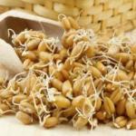 Пророщенная пшеница - настоящая живая пища.