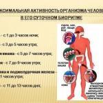 """Биоритмы человека - правильный """"Бизнес План"""" дня."""