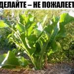 Хрен - единственное растение, способное вытягивать соль через поры кожи.