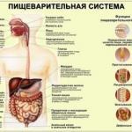 5 главных правил для улучшения пищеварения.